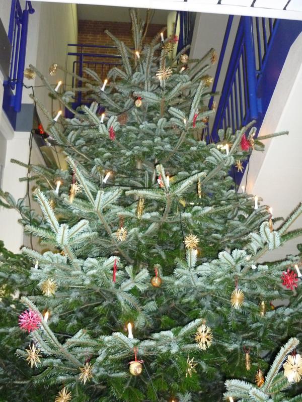 Nur die Kletterwand ist höher - unser Weihnachtsbaum 2013.