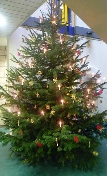 Auch in diesem Jahr sorgt ein großer Weihnachtsbaum für adventliche Stimmung im Schulalltag.